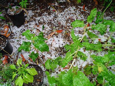 2004-11-13_gore-hail05.jpg